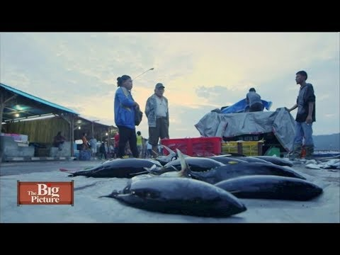 the big picture overfishing