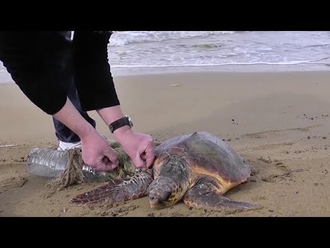 two guys save turtle wrapped