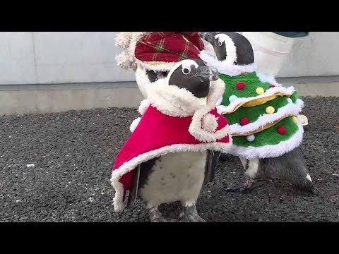 christmas penguins parade
