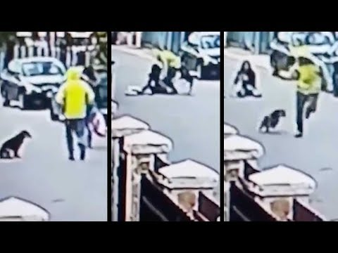 real life bolt hero stray dog saves woman